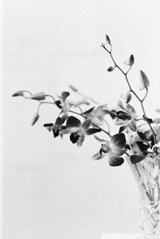 fine art floral