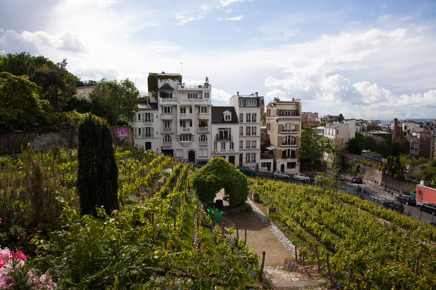 Secret Vineyard, Montmartre, Paris